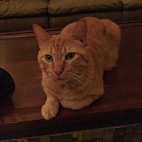 Adopt A Pet :: Zimba - Lauderhill, FL