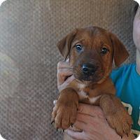 Adopt A Pet :: Jedi - Oviedo, FL
