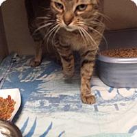 Adopt A Pet :: Raisin - Westminster, CA