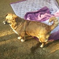 Adopt A Pet :: Michael - Oakton, VA