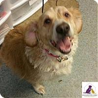Adopt A Pet :: Billie - Eighty Four, PA