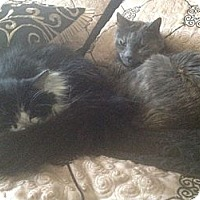 Adopt A Pet :: Tabitha&Maggie - Laguna Woods, CA