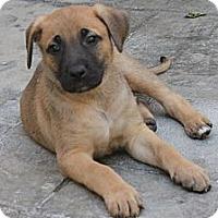 Adopt A Pet :: Sam - La Habra Heights, CA
