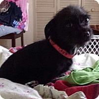 Adopt A Pet :: Delaney - 4 lbs - Phoenix, AZ