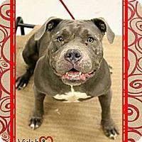 Adopt A Pet :: Violet - Scottsdale, AZ