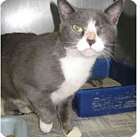 Adopt A Pet :: WILLY (SO) - Little Falls, NJ