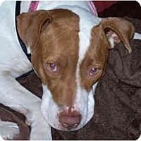 Adopt A Pet :: LucyLu - Scottsdale, AZ