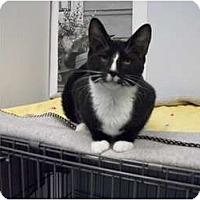Adopt A Pet :: Blaze - Modesto, CA