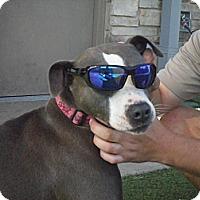 Adopt A Pet :: Olivia - white settlment, TX
