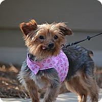Adopt A Pet :: Grace - Charlotte, NC