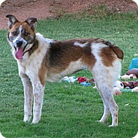 Adopt A Pet :: CASHMERE - Phoenix, AZ