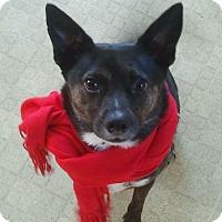 Adopt A Pet :: Volta - Acushnet, MA