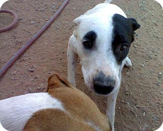 Border Collie Mix Dog for adoption in Wichita Falls, Texas - Bitsy