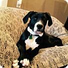 Adopt A Pet :: Jax