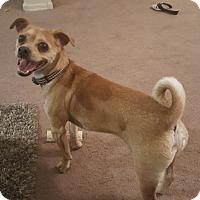 Adopt A Pet :: Pippen - Scottsdale, AZ