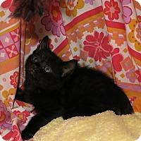 Adopt A Pet :: Randy - Geneseo, IL