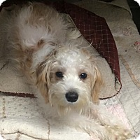Adopt A Pet :: Maggie - Oak Ridge, NJ