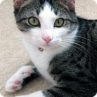 Adopt A Pet :: Mic - Arlington/Ft Worth, TX