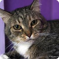 Adopt A Pet :: Chartreuse - Tucson, AZ