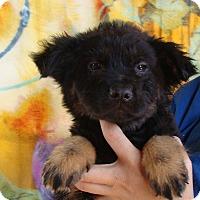Adopt A Pet :: Saturn - Oviedo, FL