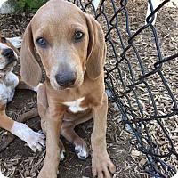 Adopt A Pet :: Mable - Sudbury, MA