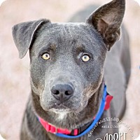 Adopt A Pet :: UNO - Fountain Hills, AZ