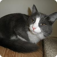 Adopt A Pet :: Oriole - Milwaukee, WI
