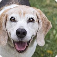 Adopt A Pet :: Maxwell - El Cajon, CA