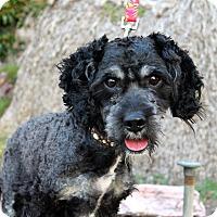 Adopt A Pet :: Chente - Los Angeles, CA
