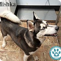 Adopt A Pet :: Mishka - Kimberton, PA