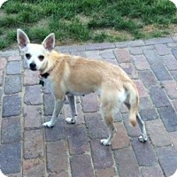 Adopt A Pet :: Meghan - Aurora, IL