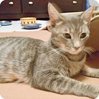 Adopt A Pet :: Gabriella - Whitehall, PA