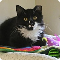 Adopt A Pet :: Oscar - Gloucester, MA