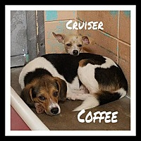 Adopt A Pet :: Cruiser - Gautier, MS