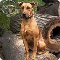 Adopt A Pet :: Mystic - New Milford, CT