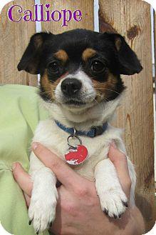 Chihuahua Mix Dog for adoption in Menomonie, Wisconsin - Calliope