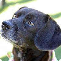 Adopt A Pet :: Suzie - Cumming, GA