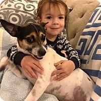 Adopt A Pet :: Max - Memphis, TN