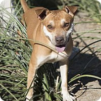 Adopt A Pet :: Rango - Palm Springs, CA