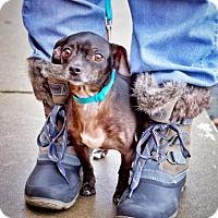 Adopt A Pet :: *Earl Grey Tea - Pittsburg, CA
