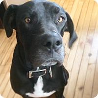 Adopt A Pet :: JACKSON - Toronto, ON