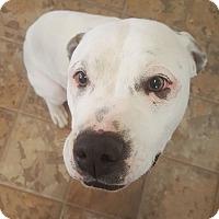 Adopt A Pet :: Star - Douglas, WY