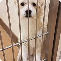 Adopt A Pet :: Mork - Grass Valley, CA
