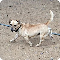 Terrier (Unknown Type, Medium) Mix Dog for adoption in Bonsall, California - Dozer