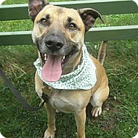Adopt A Pet :: Abby - Crescent City, CA