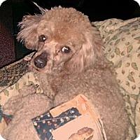 Adopt A Pet :: JOEY - Bowie, TX