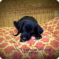 Adopt A Pet :: Cole - Gadsden, AL