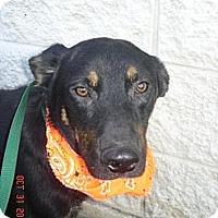 Adopt A Pet :: Archie - Stilwell, OK