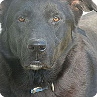 Adopt A Pet :: Big Joe - Wakefield, RI
