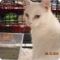 Adopt A Pet :: Felicia - Riverside, RI